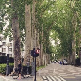treelined walk and bike path